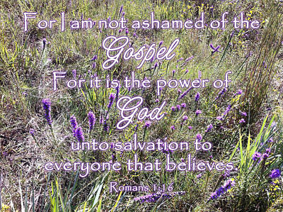 Photograph - Not Ashamed Of The Gospel by Robyn Stacey