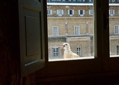 Photograph - Not So Happy Gull At The Vatican by Herb Paynter