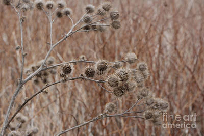 Photograph - Not So Prickly by Barbara McMahon