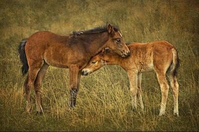Not So Wild Wild Horses Art Print by Priscilla Burgers