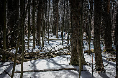 Photograph - Not Spring Yet by Ronald Grogan