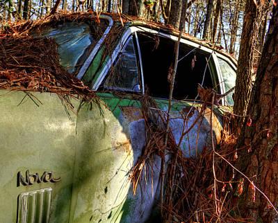 Pine Needles Photograph - Nova In The Woods by Greg Mimbs