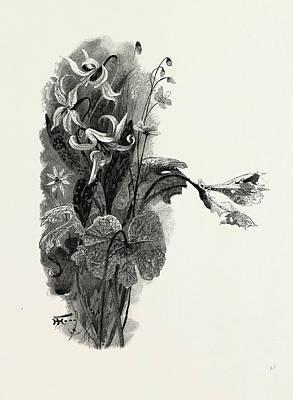 Nova Scotia, Spring Beauty, Sanguinaria, And Dog-tooth Art Print