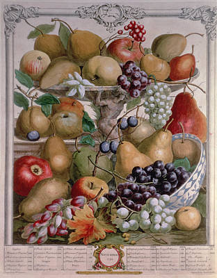 Apple Photograph - November, From Twelve Months Of Fruits, By Robert Furber C.1674-1756 Engraved By James Smith, 1732 by Pieter Casteels