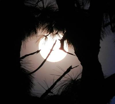 Photograph - Florida November Full Moon by Belinda Lee
