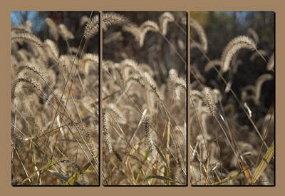 Photograph - November Grass With Tan by Michael Flood