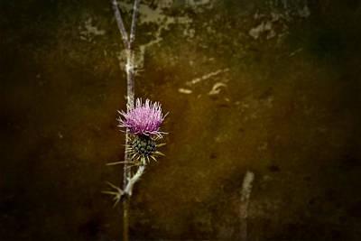 Photograph - November  by Mark Ross
