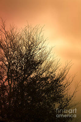 Photograph - November Memories by Jan Bickerton