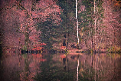 Photograph - November Red by Alexander Kunz