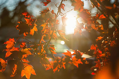 Photograph - November Sun by Kunal Mehra
