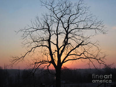 Photograph - November Walnut Tree At Sunrise by Conni Schaftenaar