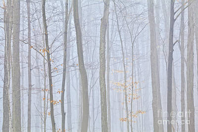 Photograph - November Woodland Fog by Alan L Graham