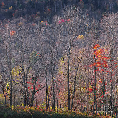 Photograph - November Woods by Alan L Graham