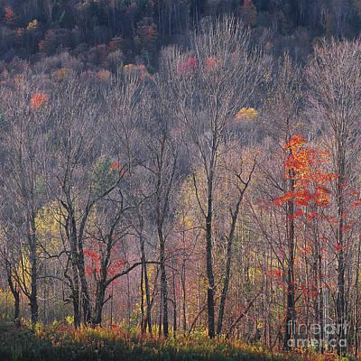 Impressionist Landscapes - November Woods by Alan L Graham