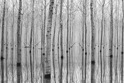 Birch Trees Photograph - Novembre 2014 by Aglioni Simone