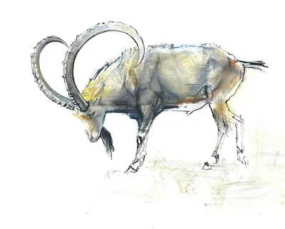 Work On Paper Painting - Nubian Ibex by Mark Adlington