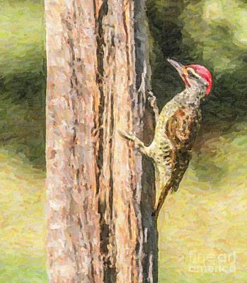 Digital Art - Nubian Woodpecker Campethera Nubica by Liz Leyden