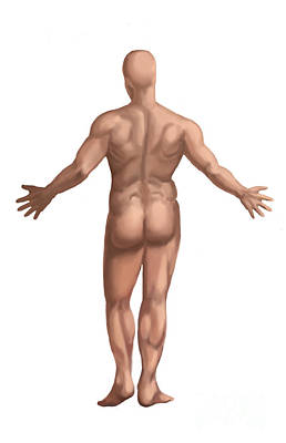 Male Nude Drawing Photograph - Nude Man by Spencer Sutton