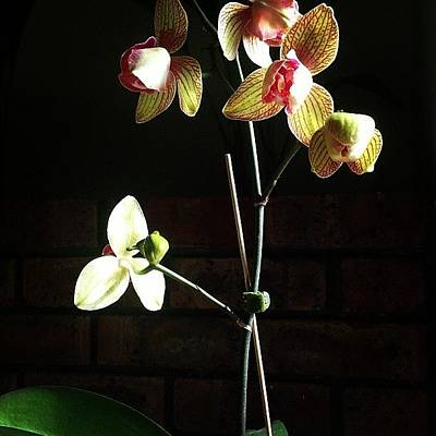 Orchids Photograph - Number 5 Is Alive!!! Cannot Believe by Lisa Barrett