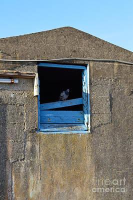 Animal Photograph - Nur Ein Blick by Bretislav Stejskal