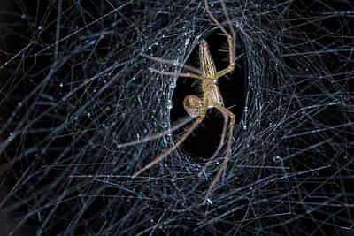 Huntsman Spider Photograph - Nursery Web Spider On Its Nursery Web by Melvyn Yeo