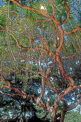 Wailuku Painting - Nurture by Terry Reynoldson