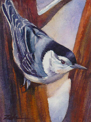 Painting - Nuthatch by Janet Zeh