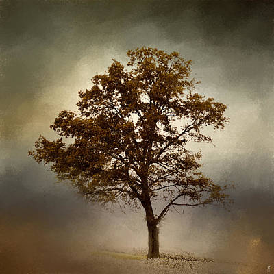 Photograph - Nutmeg Cotton Field Tree - Landscape by Jai Johnson