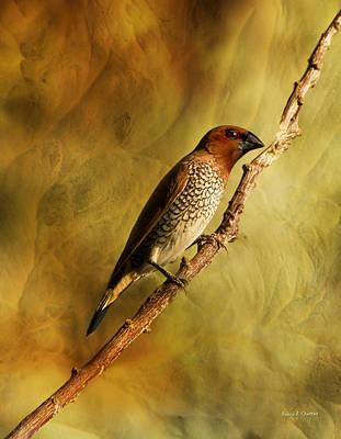 Nutmeg Mannikin Aka Spice Finch Art Print by Angela A Stanton
