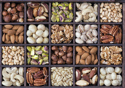 Nuts Art Print by Tim Gainey