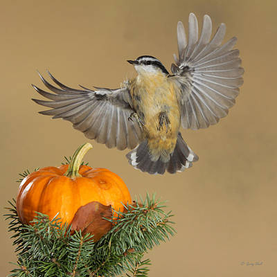 Photograph - Nutty Flashing The Pumpkin by Gerry Sibell