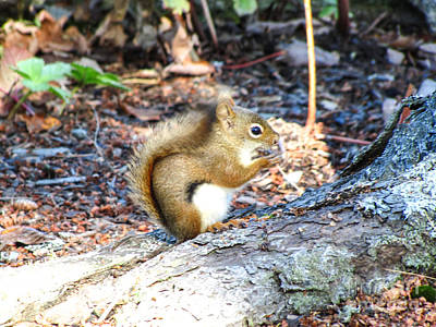 Winter Animals - Nutty for Maine by Beverly Tabet