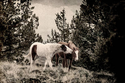 Wild Horse Photograph - Nuzzling D9030 by Wes and Dotty Weber