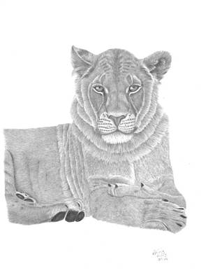 Drawing - Nyah The Lioness by Patricia Hiltz