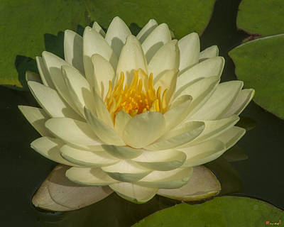 Photograph - Nymphaea Water Lily Dthb1627 by Gerry Gantt