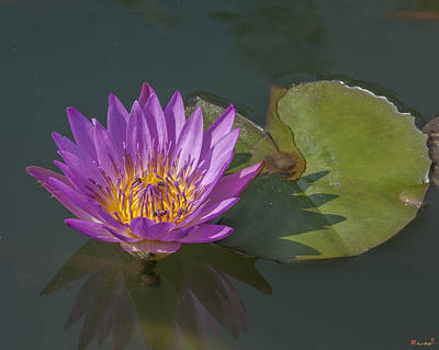 Photograph - Nymphaea Water Lily Dthb1630 by Gerry Gantt