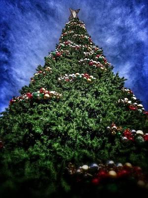 Photograph - O Christmas Tree by Mark David Gerson