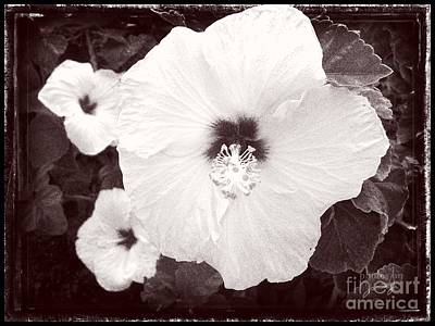 Photograph - Oahu Hibiscus by Jamie Johnson