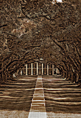 Oak Alley Bw Art Print