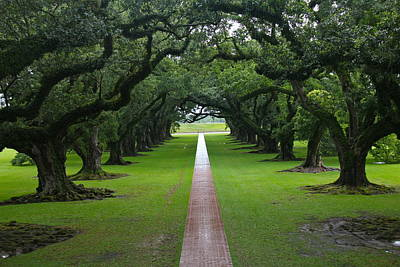 Photograph - Oak Alley by Denise Mazzocco