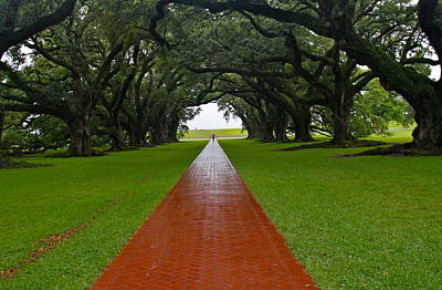 Photograph - Oak Alley Path by Denise Mazzocco