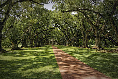 Photograph - Oak Alley Plantation Color Dsc05007 by Greg Kluempers