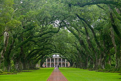 Photograph - Oak Alley Plantation by Denise Mazzocco