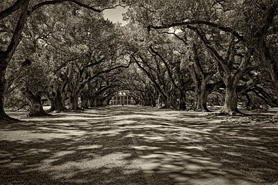 Photograph - Oak Alley Plantation Sepia Dsc05007 by Greg Kluempers