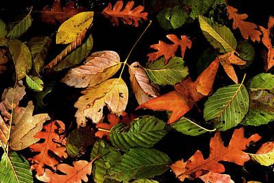 Wall Art - Photograph - Oak Creek Fall by Reed Rahn