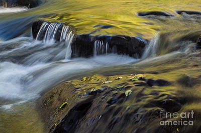 Photograph - Oak Creek Gold by Marianne Jensen