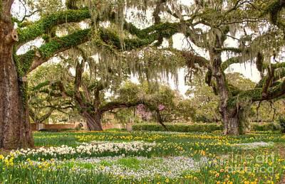 Photograph - Oak Gardens by Kathy Baccari