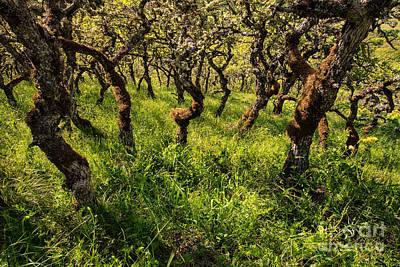 Photograph - Oak Grove In Sunlight by Stuart Gordon