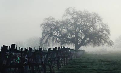 Pinot Noir Photograph - Oak In The Fog. by Stan Angel