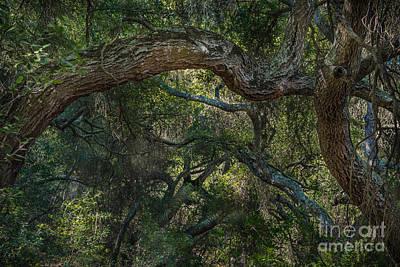 Photograph - Oak Jungle by Alexander Kunz